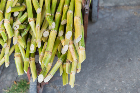 bioenergy: Sugarcane bagasse, source of sweet sugar for food and nature fiber recycle for biofuel pulp and building materials. Stock Photo