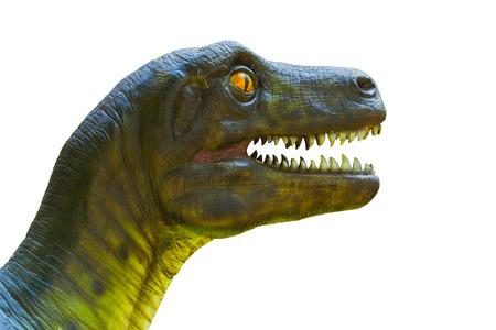 Closeup dinosaur head isolated on white. Stock Photo