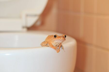 invade: wildlife invade the house, frog at bathroom