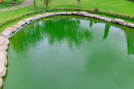 green water pond tropical lake, ecology of alga in swamp.