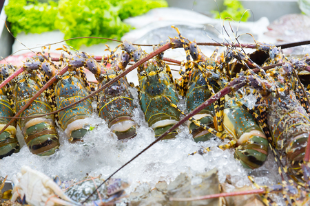 Fresh raw uncook Lobster Shrimp on ice in luxury seafood street market in Thailand. Stock Photo