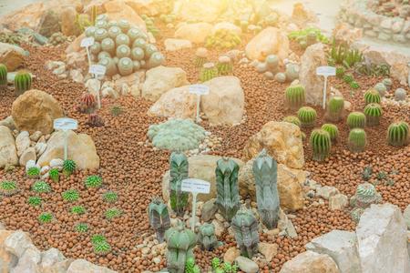 cactus park garden various type of cactus plant.