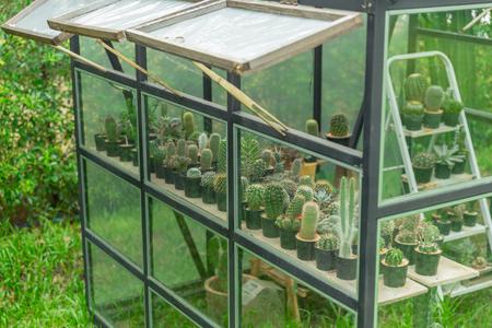 근접 촬영 선인장 종묘 심기 집 정원에서 그린 하우스. 스톡 콘텐츠
