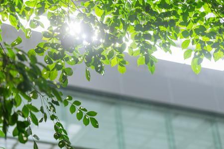 eco building or green office plant tree and garden in city concept. Foto de archivo