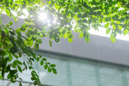 eco building or green office plant tree and garden in city concept. Archivio Fotografico