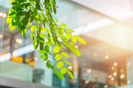 eco building or green office plant tree and garden in city concept. Banque d'images