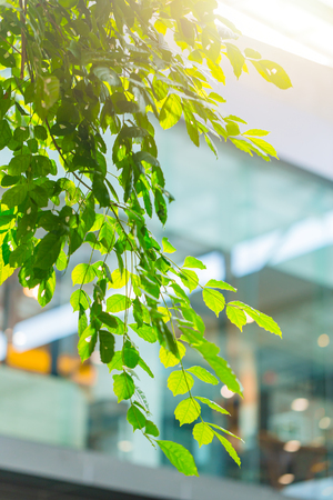 green eco building office interior with plant tree garden inside for fresh ozone air in city