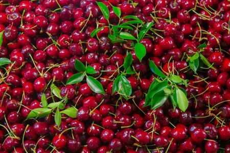 Cherry fruit red sweet cherry background cover scene