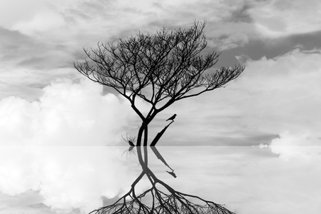 die tree in the water art abstract photography Stock Photo