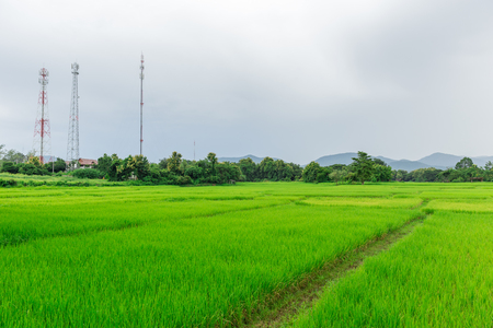 rural rice field with mobile communication signal tower landscape in asian countryside Stock Photo