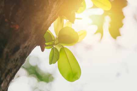 new life everyday concept green tree sprout in the park with morning sun light background