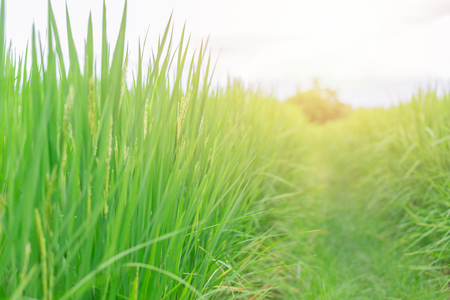 walk way path into the green grass field