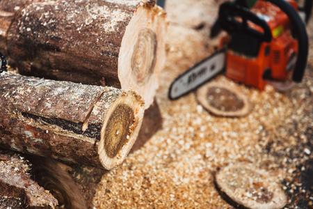 Wood cut log by Sawmill forest environmental destruction industry