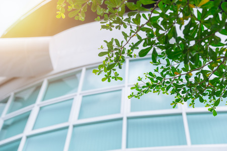 green eco building office windows with tree to save energy concept