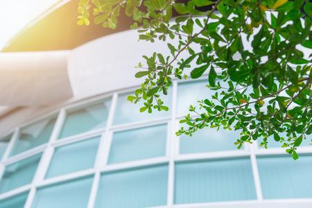 Vert éco fenêtres de bureau avec arbre pour sauver le concept de l & # 39 ; énergie Banque d'images - 94119096
