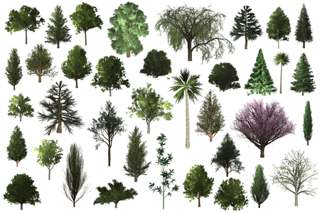 albero impostato per l'architettura del paesaggio, collezione di oggetti albero isolato su sfondo bianco Archivio Fotografico