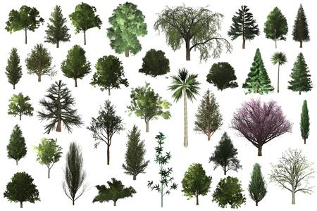 Conjunto de árbol para el diseño del paisaje de arquitectura, colección de objetos de árbol aislado sobre fondo blanco. Foto de archivo