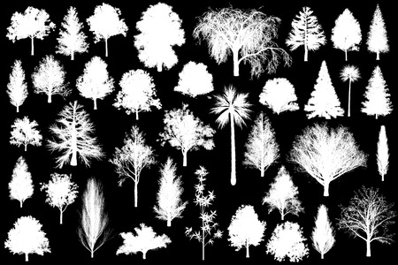 3d tree set collection plant isolated illustration alpha channel black and white monotone