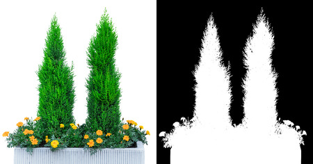 garden tree plant decoration isolated on white with alpha channel