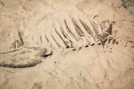 Dinosaur fossil found, Primitive animals bone discovered.