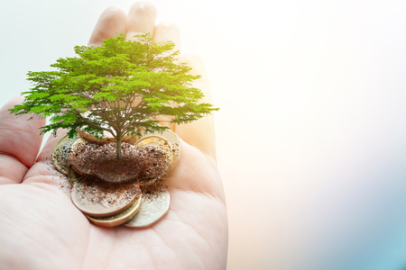 Pay money donation for green eco saving environment and earth ecology sustainable concept. 免版税图像