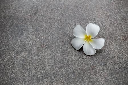 White plumeria flower drop on the ground.
