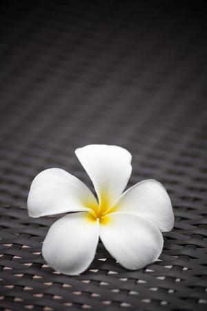 White plumeria flower with dark tone pattern background.