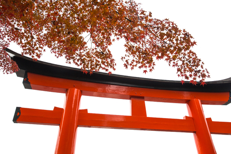 Torii or Tori gate with autumn maple leaf isolated on white background 版權商用圖片