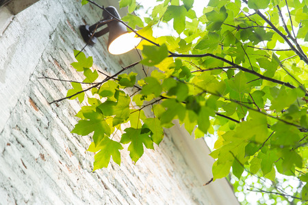 green plant tree with interior home for fresh air cooling house concept Stock Photo