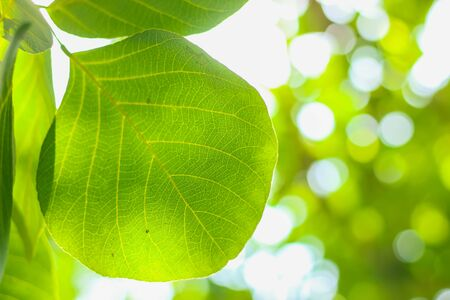 green nature plant leaf closeup with blur bokeh background