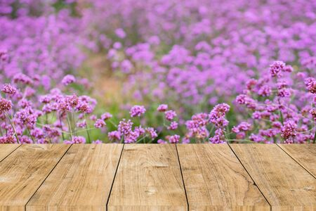 Verbena flower field with table top forground space for advertising banner desing template Stock fotó