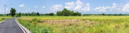 rural asphalt country road side rice field wide angle panorama landscape view.