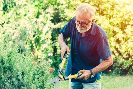 elder cut trim the bushes green shrub plant in the backyard park outdoor for hobby in holiday.