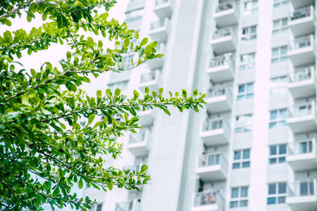 Green city gardens tree leaf with skyscrapers building for eco urban concept