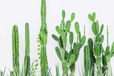 Cactus plant on white wall in modern home interior green botany decoration nature background