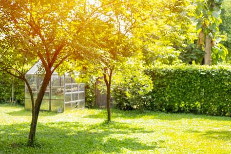 blur lawn garden backyard green park tree outdoor for nature background