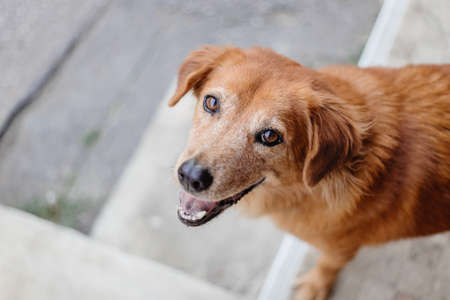 Dog smile cute innocent eyes looking camera 免版税图像