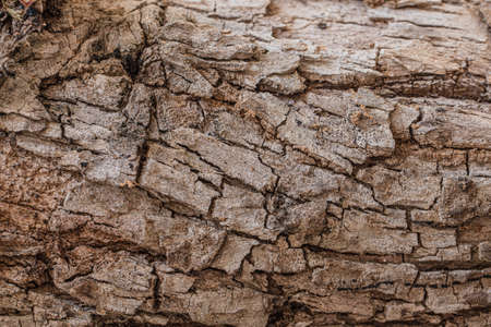 Dry brown high detail tree bark texture for background