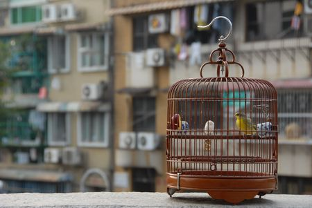 confined: cage bound (the high population density and crowded living condition in some Asian cities is sometimes being compared to birds confined in a cage) Stock Photo