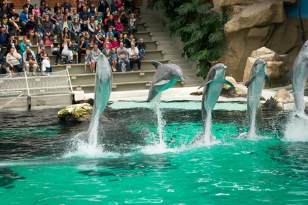 Jumping dolphins Editorial