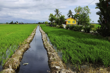 Old house by the paddy field in Sekinchan Sekinchan is a small, cozy farming and fishing village located at west coat of Malaysia