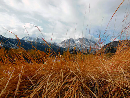 red grass: View through the Red Grass