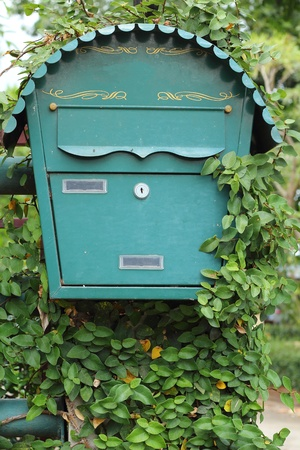 Mailbox and green leaves photo