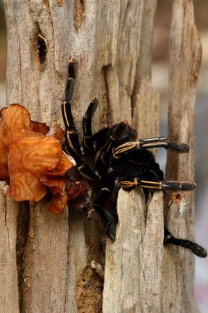 wood spider: Spider on the wood