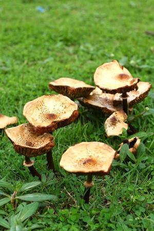 mushroom picking: Mushroom on a grass