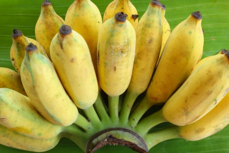 Banana on banana leaves photo