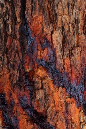 sap: Sap tree