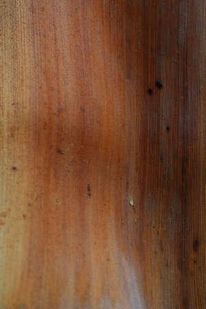 Betel palm background Stock Photo - 16904962