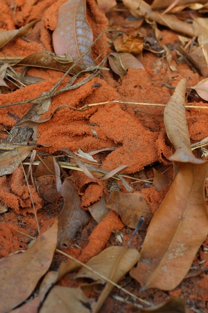 anthill: Anthill and dry leaves