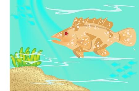 Greasy grouper Stock Vector - 16983999